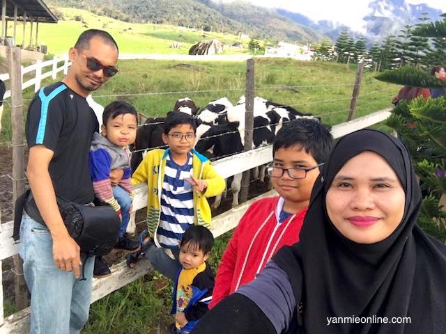 Jalan-jalan Ke Desa Dairy Farm Kundasang Sabah